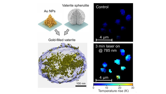 This shows the 3D reconstruction of the golden vaterite and the laser-induced heating of the spherulites.